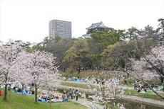 愛知県で一番の桜の名所・「岡崎公園」