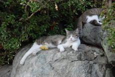 最近モヤモヤしている方にオススメ。守山区竜泉寺の10円鐘つき