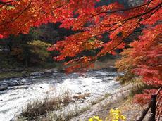 まだ間に合う!!愛知県でも有名な紅葉スポット!豊田市足助町の香嵐渓レポート