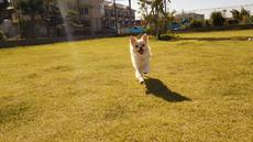 わんちゃんと一緒に世界旅行!!12月3日は犬山市、リトルワールドへ!! -わん!!ダフルワールド~愛犬と一緒に世界旅行~-