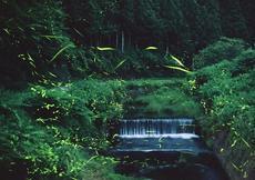 ホタルシーズン到来!岡崎の「鳥川ホタルの里」と蛍ラーメン