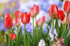 チューリップなどの花が見頃の138タワー、2019GWイベント