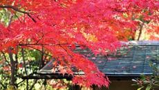 11月16日から白鳥庭園で「観楓会/あかりアート」が開催!