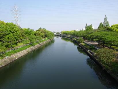 荒子川桜の木.JPG