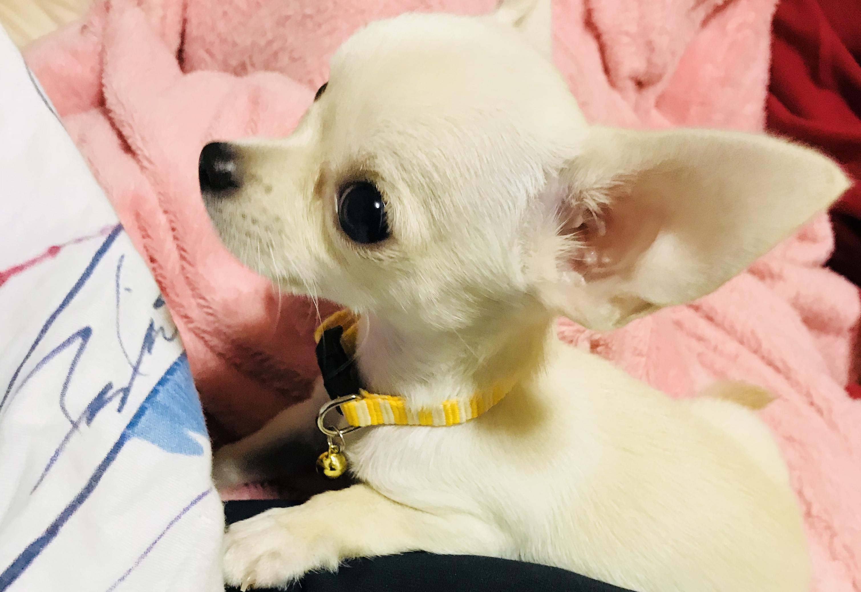 わんにゃんサイトの犬の写真
