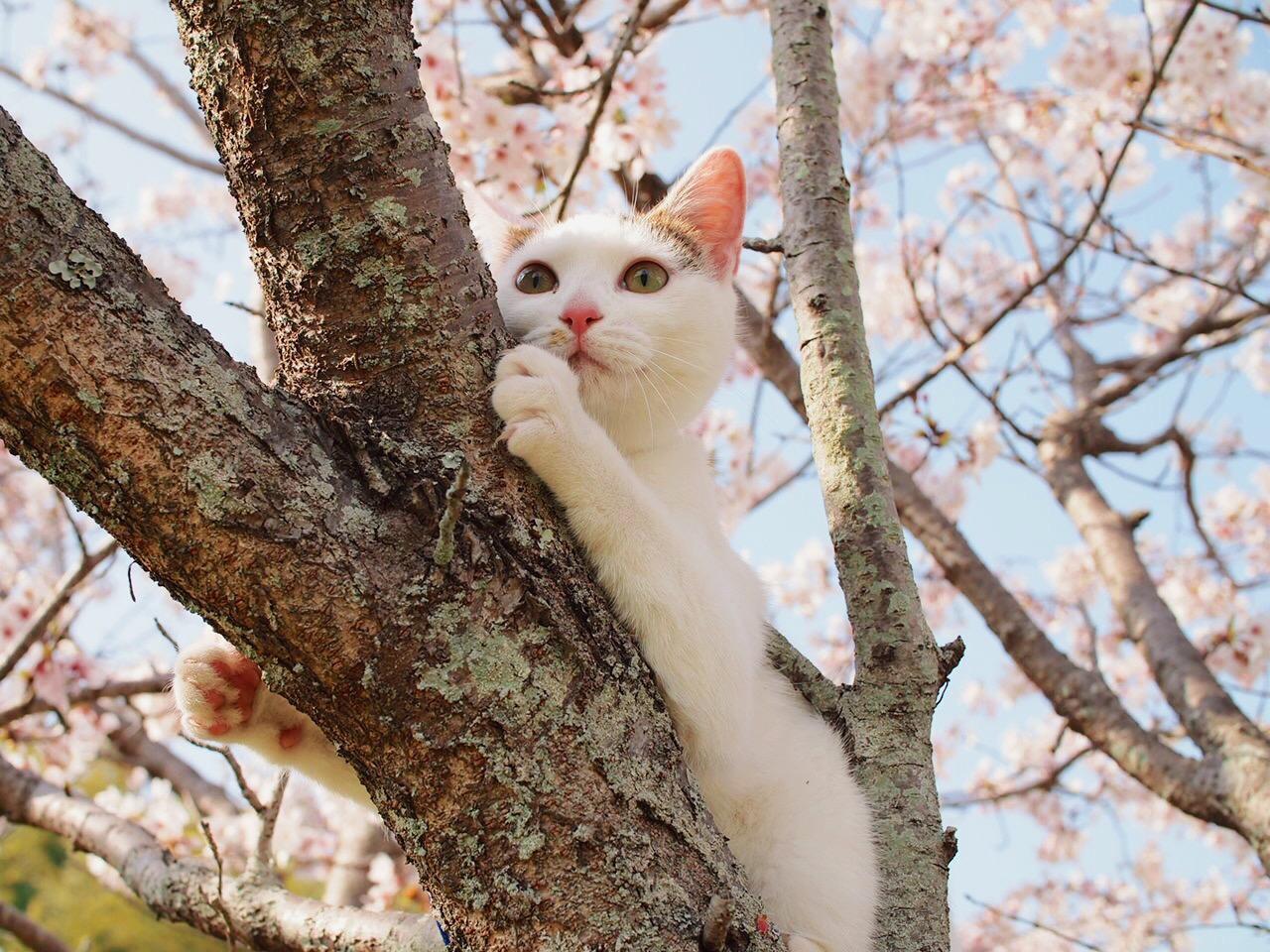 わんにゃんサイトの猫の写真